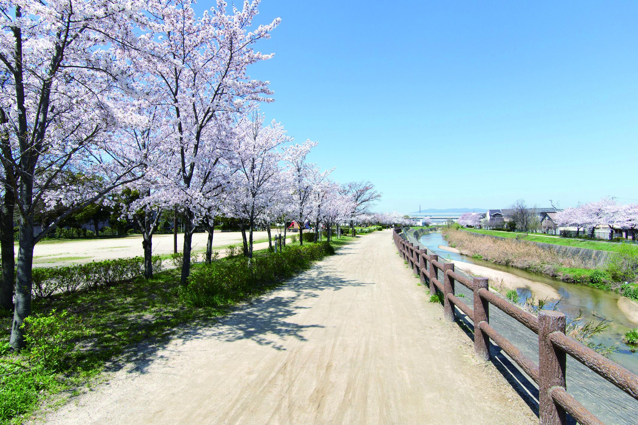 徒歩8分には公園などが整備された天野川緑地があります。